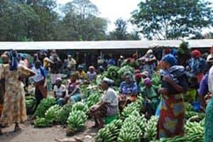 Picture of A banana market in Tanzania (Photo by Brita D. Jensen)