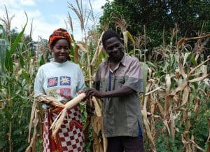 Picture of a farmer that uses drought tolerant maize variety.