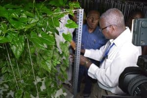 Picture of Chief Ogbeh inspecting how IITA grows yam in the air through aeroponics.