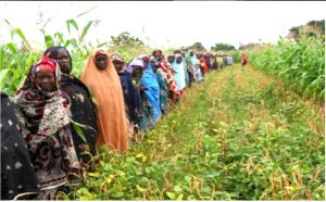 Picture of Women farmers admire improved cowpea variety from IITA.