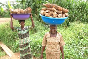 Picture of women with cassava