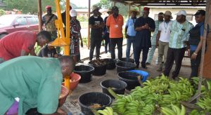 Picture of Dr Agogbua (far right) explains the process of Banana seed extraction as DG listens with keen interest