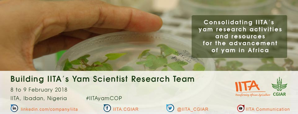 Picture of Building of IITA Yam Scientists Research Team banner
