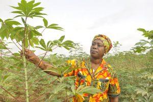 Picture of Elizabeth Parkes, HarvestPlus Cassava Breeder