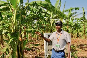 Picture of Moses Nyine of IITA explains about his research in a banana field in Uganda