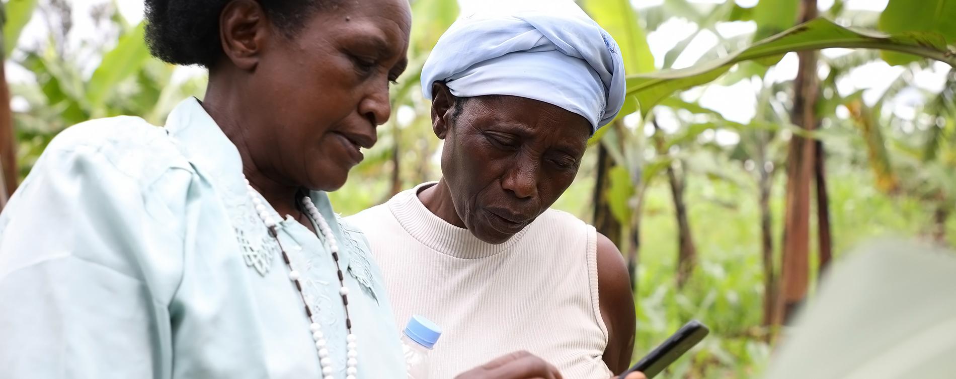 IITA-Rwanda releases a digital application in the fight against bacterial wilt disease in bananas