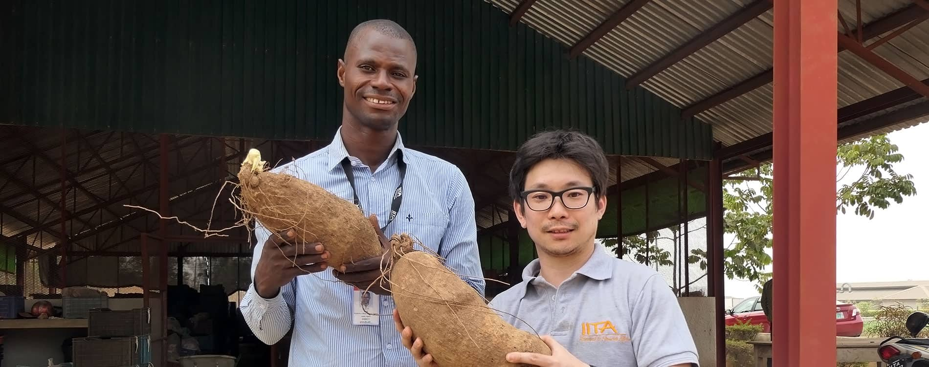 IITA BIP team sets new production per hectare record for yam farmers in Nigeria