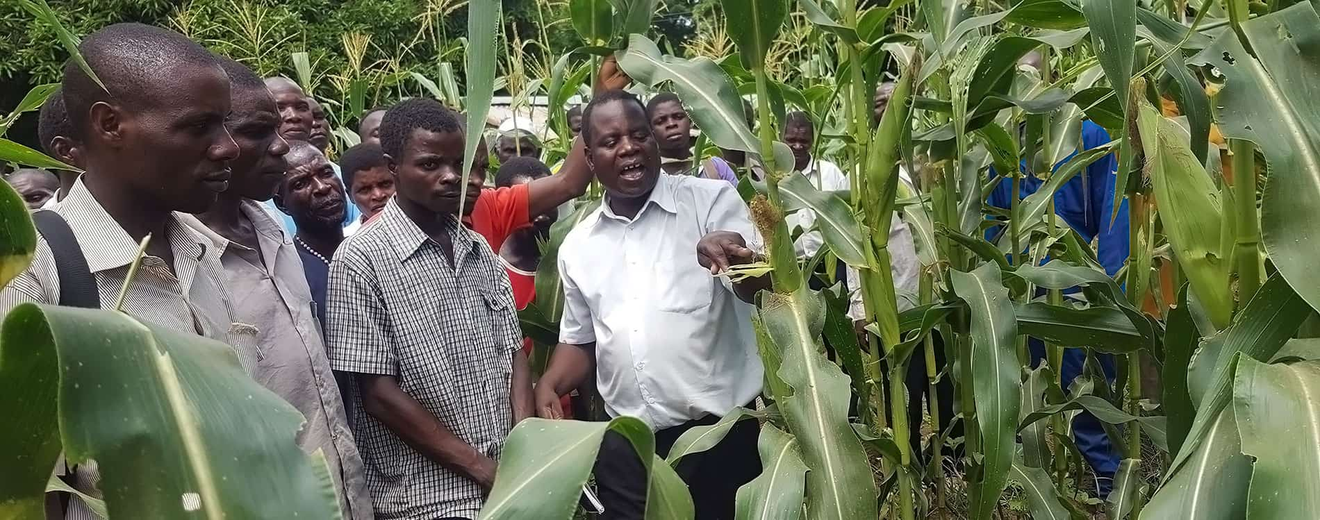 Malawi registers Aflasafe®—The cost-effective technology for aflatoxin management