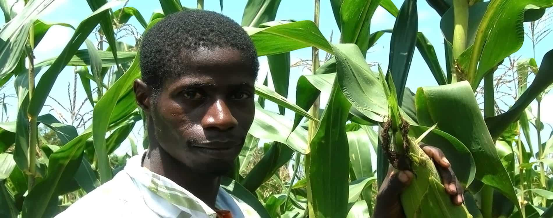 Maize project supports partners in COVID-19 response