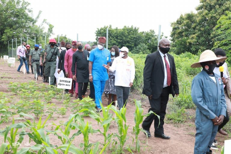 IITA DG Nteranya Sanginga showing Governor Makinde some of the crop farms.