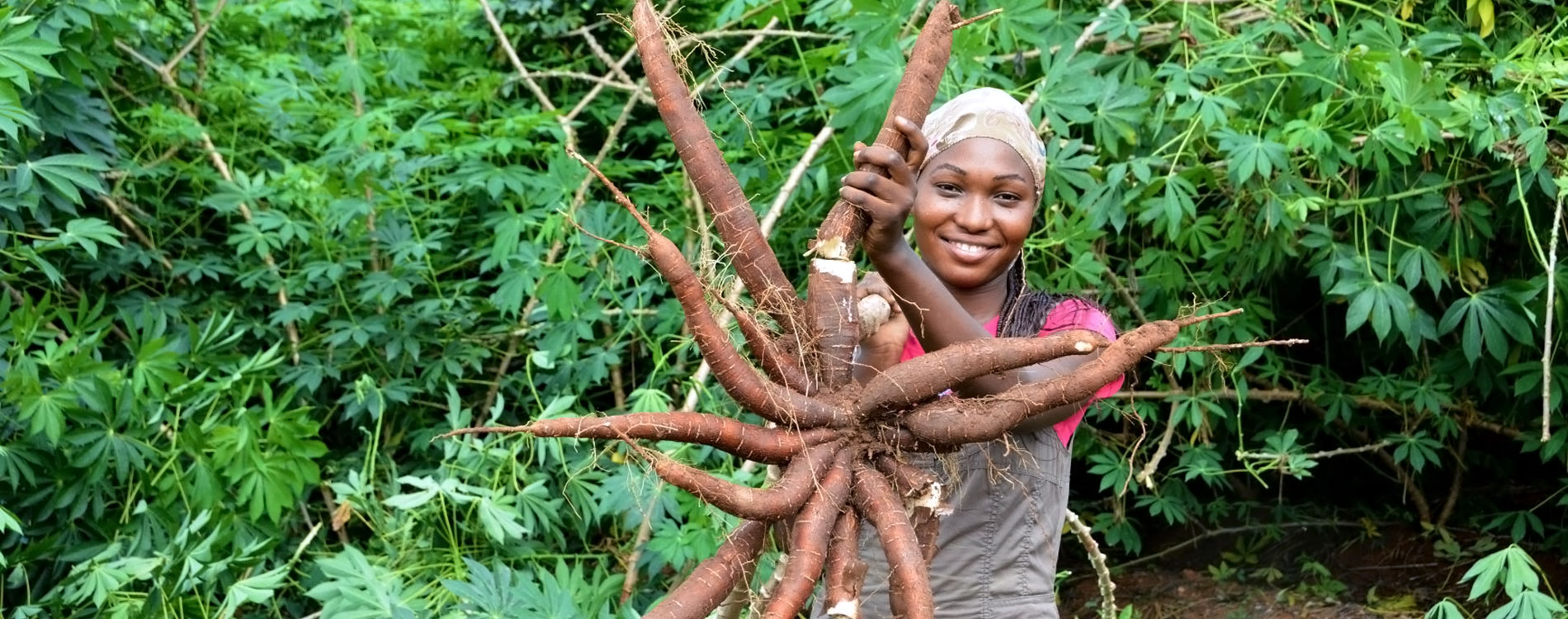 A farmer proudly displays TME419 cassava variety