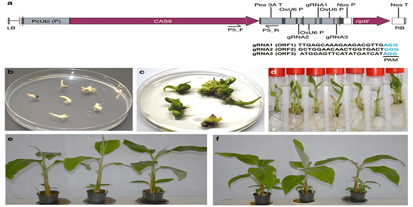 IITA paper on genome editing among most read Open Access journal