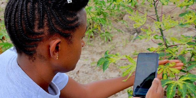 PlantVillage NuruAI app among key innovations supporting poor farmers to cope with climate change