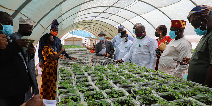 IITA to partner with the Nigerian Government on good agricultural policies